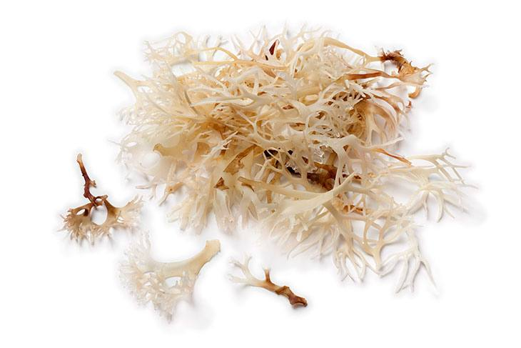 irish moss benefits